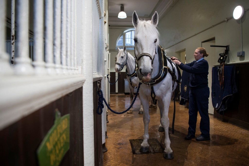 A Windsor Grey, one of the four horses that will pull the carriage at the wedding of Prince Harry and Meghan Markle, is groomed at the Royal Mews at Buckingham Palace, London.