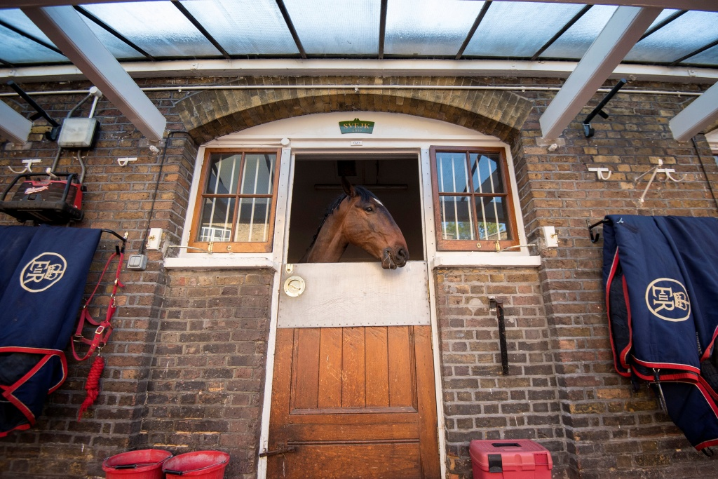 A Cleveland Bay horse is seen in the Royal Mews at Buckingham Palace, London, ahead of wedding of Prince Harry and Meghan Markle.