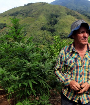 Romairo Aguirre, a farmer who grows illegal marijuana, seeks to enter into legality by cultivating medicinal marijuana in the mountains of Cauca