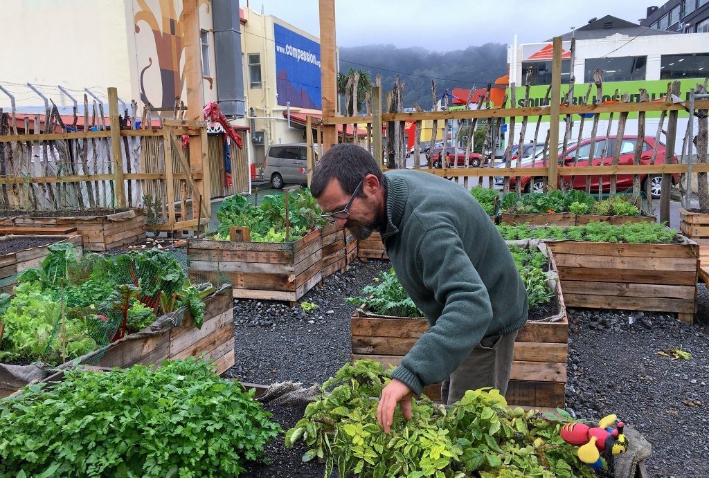 Social worker Matt Petrie inspects a garden that is cared for by guests of the Compassion Soup Kitchen in Wellington