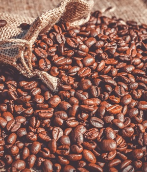 Coffee faces a double threat to its existence in eastern Ethiopia