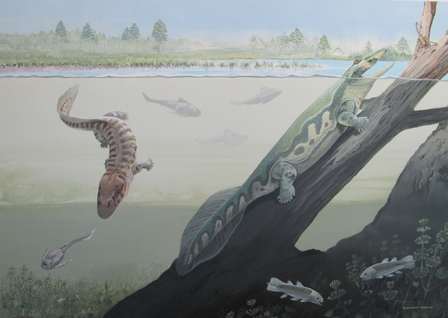 Two newly discovered early amphibians Tutusius and Umzantsia that lived about 360 million years ago during the Devonian Period in South Africa