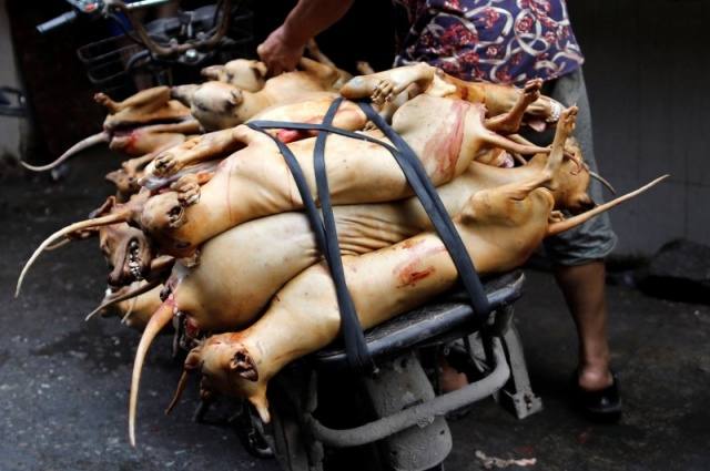 Butchered dogs are transported to a vendor's stall at a market during the local dog meat festival in Yulin