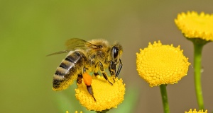 Bees get death-by-pesticide funeral in Paris