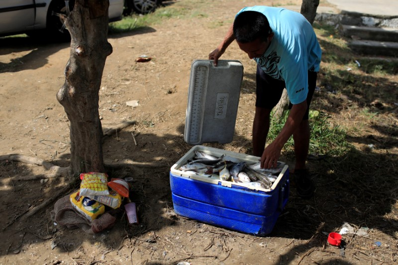 A man organizes fish in a cooler that he intends to barter for basic staples in Rio Chico