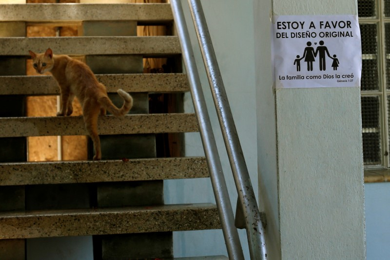 A cat climbs the stairs as a placard opposing gay marriage is seen on a wall in Havana