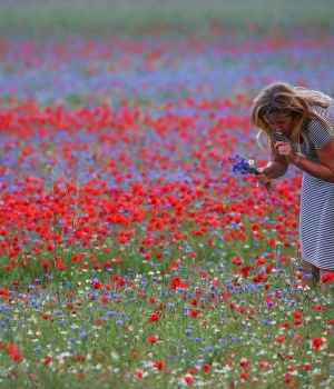 A woman collects flowers during the annual blossom in Castelluccio di Norcia