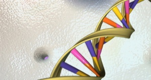A DNA double helix is seen in an undated artist's illustration released by the National Human Genome Research Institute