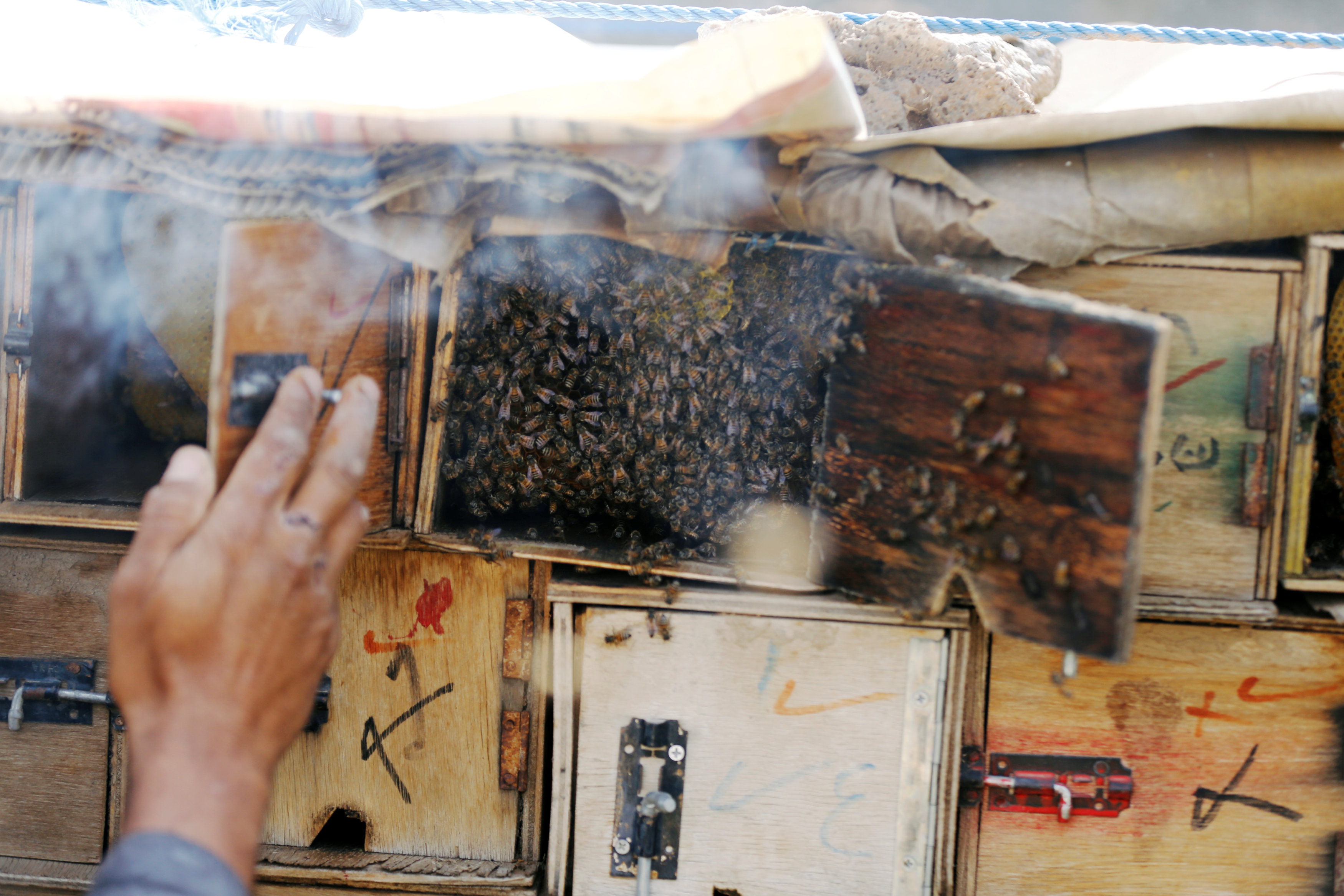 Swarm of bees is seen making honey in a hive at a farm in Hamdan