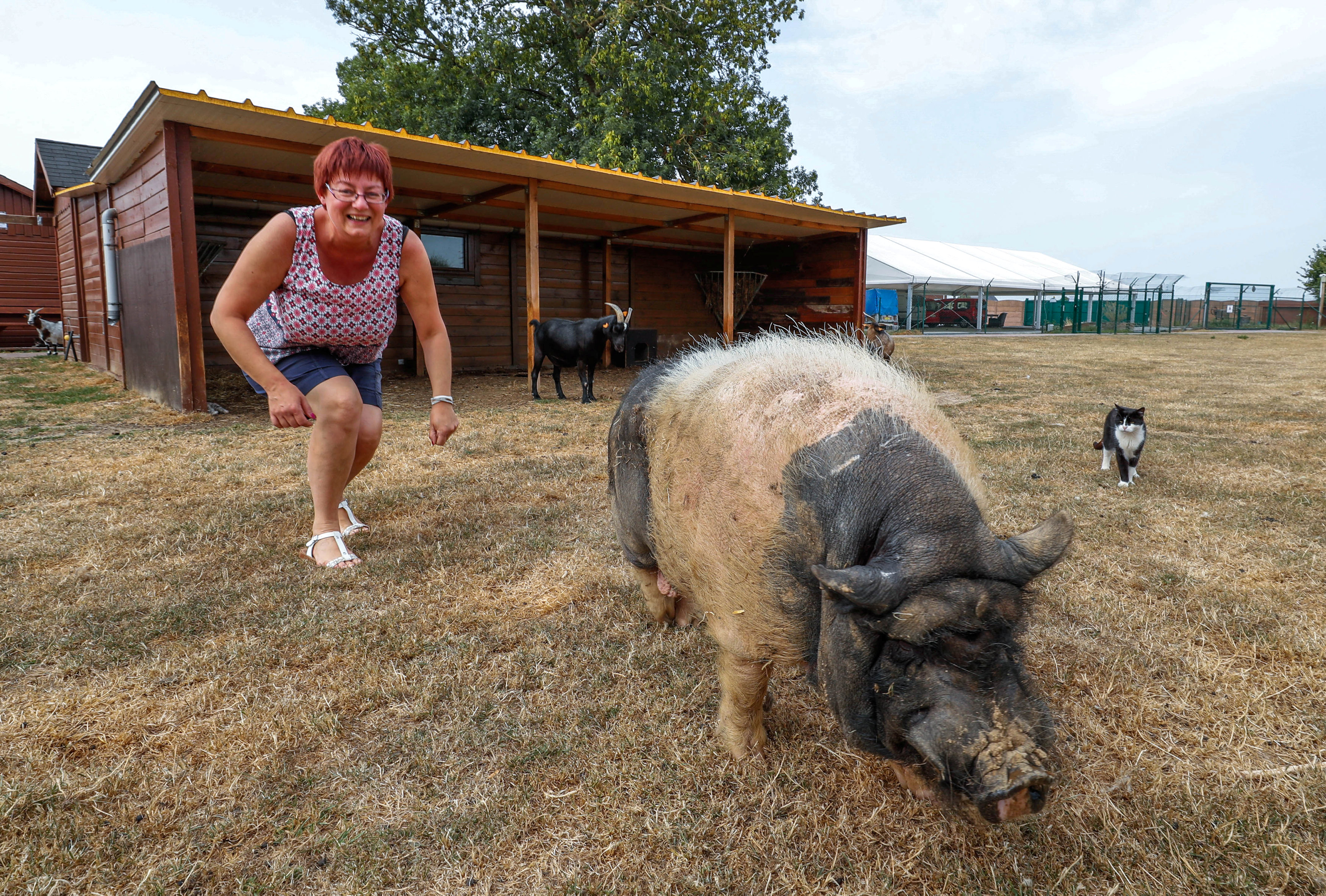 "Belgian Valerie Luycx, a founder of the association ""Les Petits Vieux"" acting as home for dozens of elderly animals, including dogs, cats, pigs and goats, looks at Pastis, a 10-year-old Vietnamese pig, in Chievres"