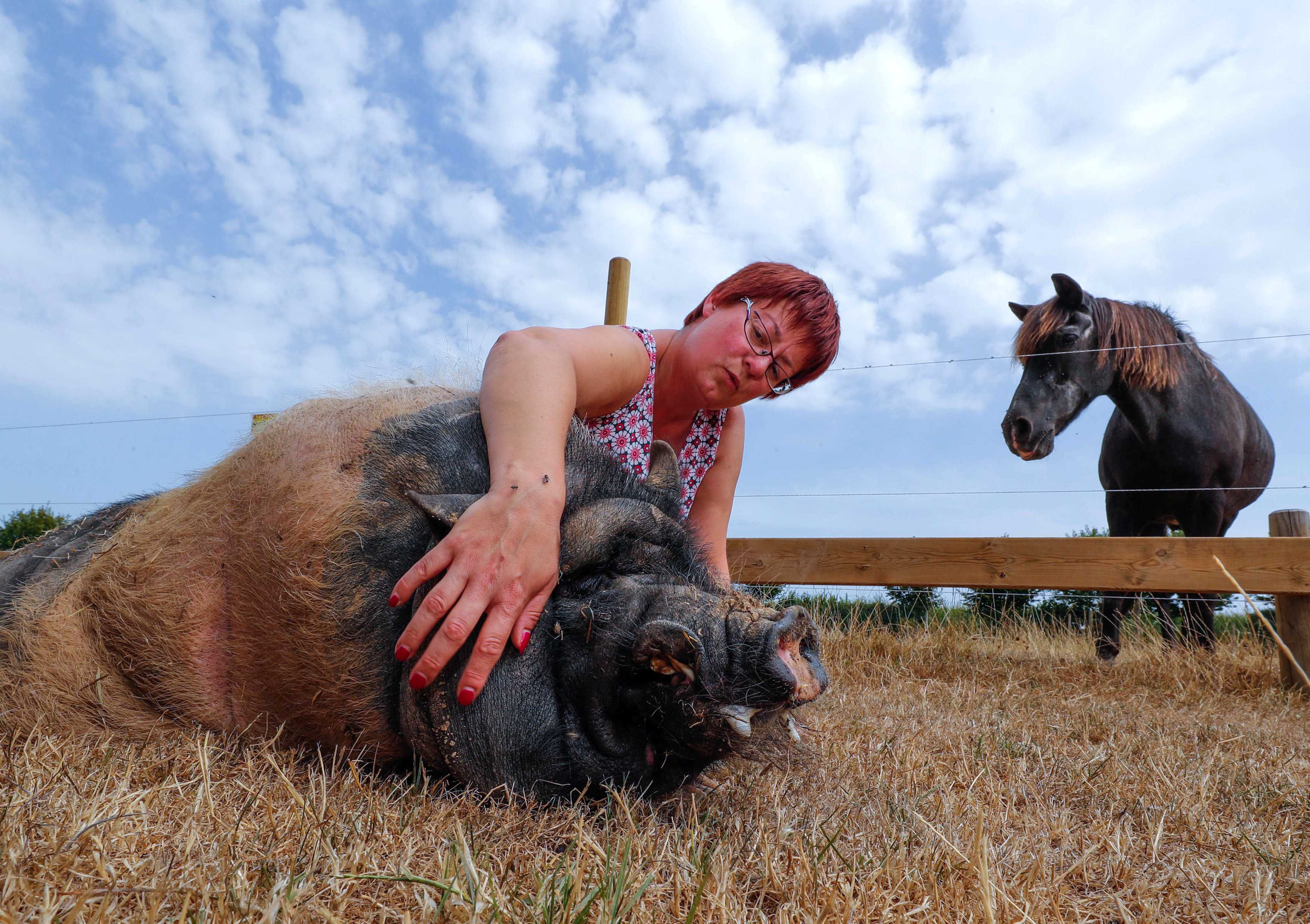 "Belgian Valerie Luycx, a founder of the association ""Les Petits Vieux"" acting as home for dozens of elderly animals, including dogs, cats, pigs and goats, caresses Pastis, a 10-year-old Vietnamese pig, in Chievres"