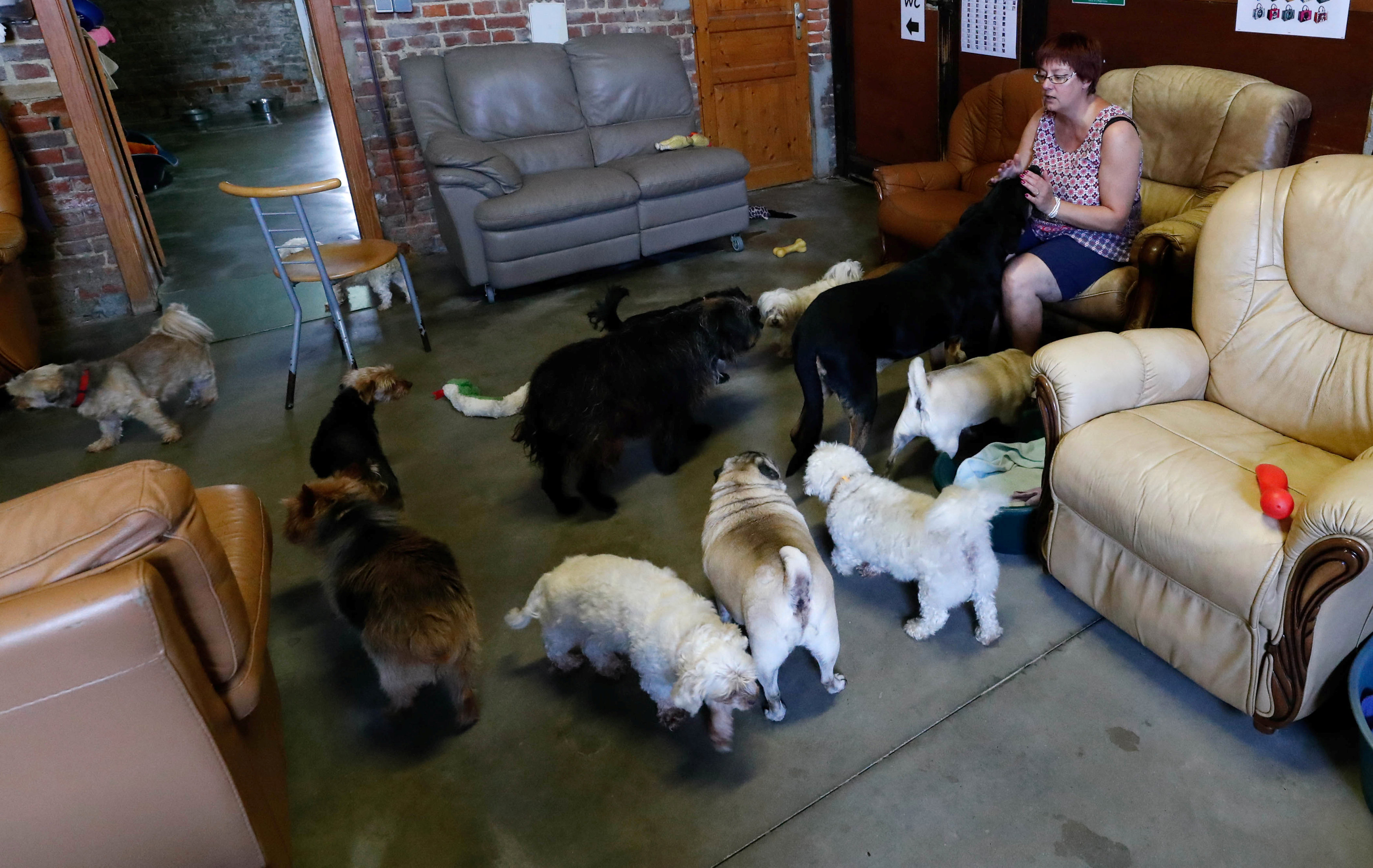 "Belgian Valerie Luycx, a founder of the association ""Les Petits Vieux"" acting as home for elderly animals, sits among some of the hundreds of pets, in Chievres"