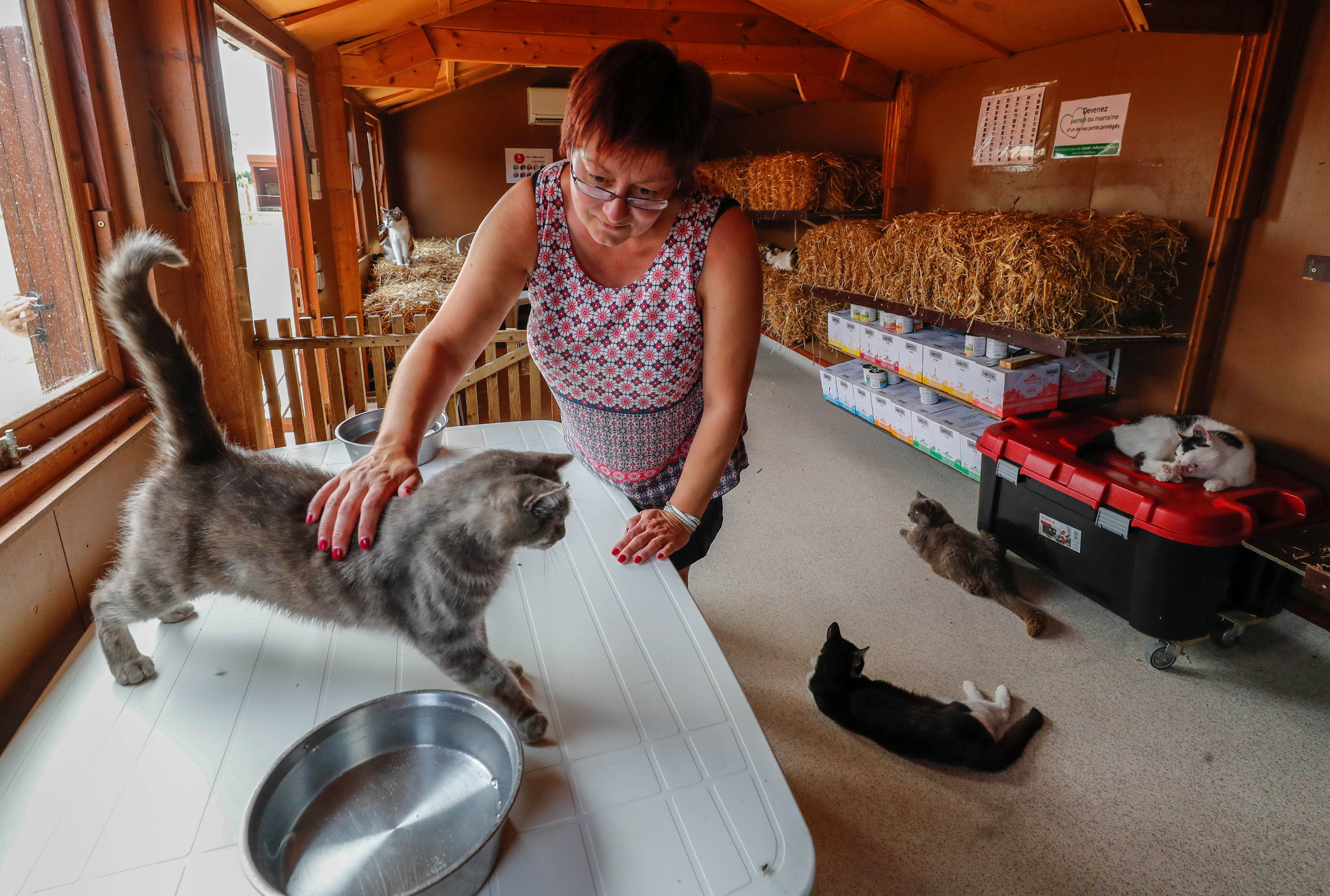 "Belgian Valerie Luycx, a founder of the association ""Les Petits Vieux"" acting as home for dozens of elderly animals caresses Calin, a European cat, in Chievres"
