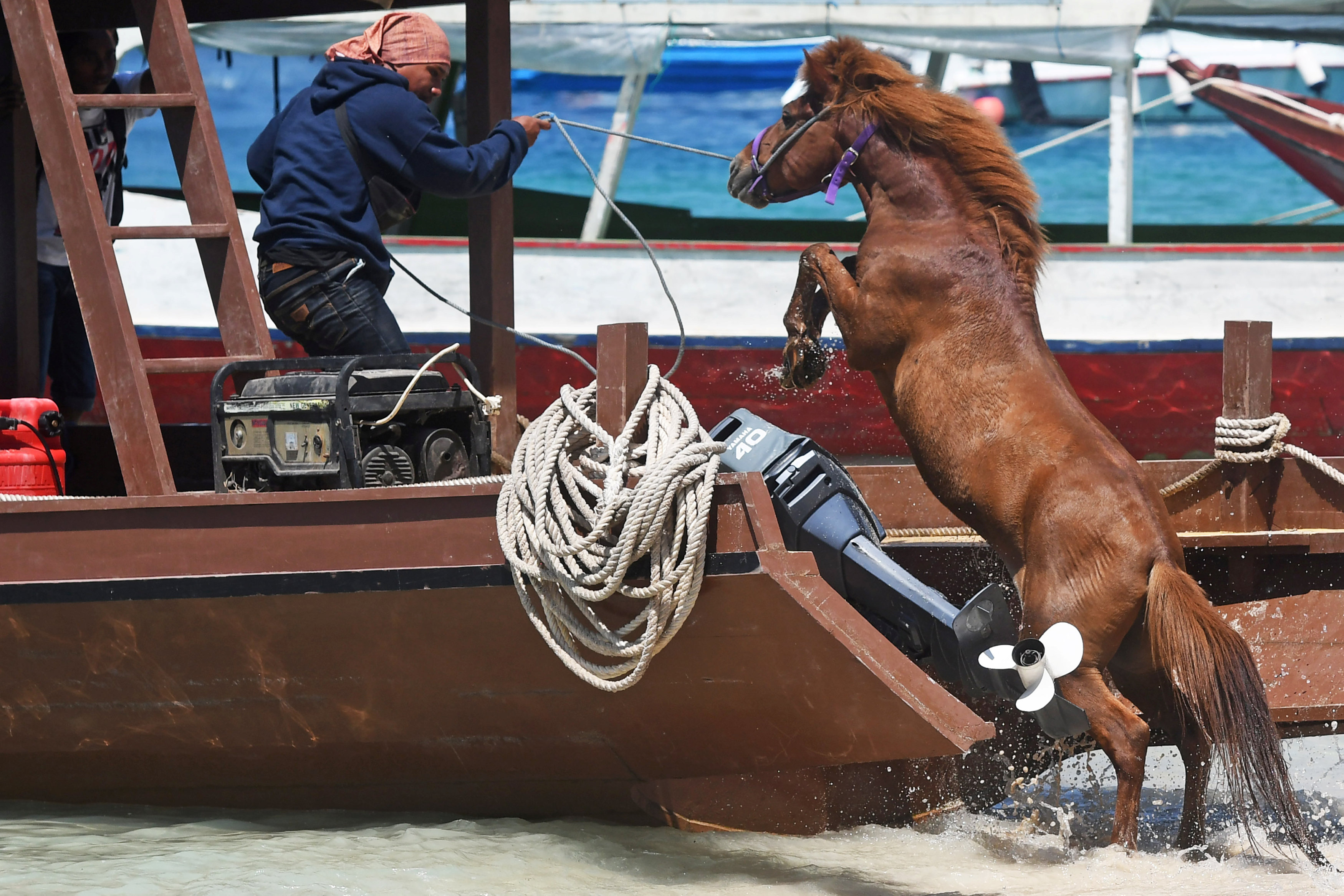 A man guides a horse onto a boat to transport it to the mainland following Sunday's earthquake on Gili Trawangan, Lombok