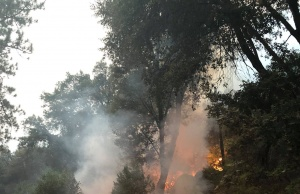 The El Portal Road to Yosemite Valley is closed as wildfire burns in Yosemite National Park