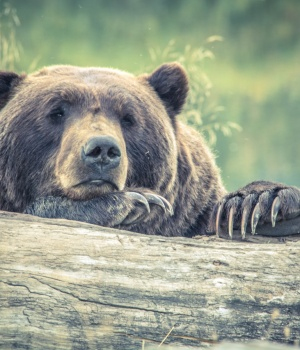 Montana case could block first grizzly hunts in 40 years