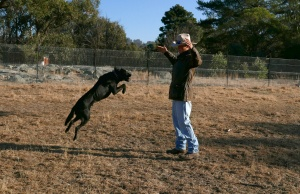 Pet dog Snoop jumps up to Paddy from BackTrack YouthWorks in Armidale