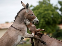 The Wider Image: In Mali, donkeys help with the fight against waste