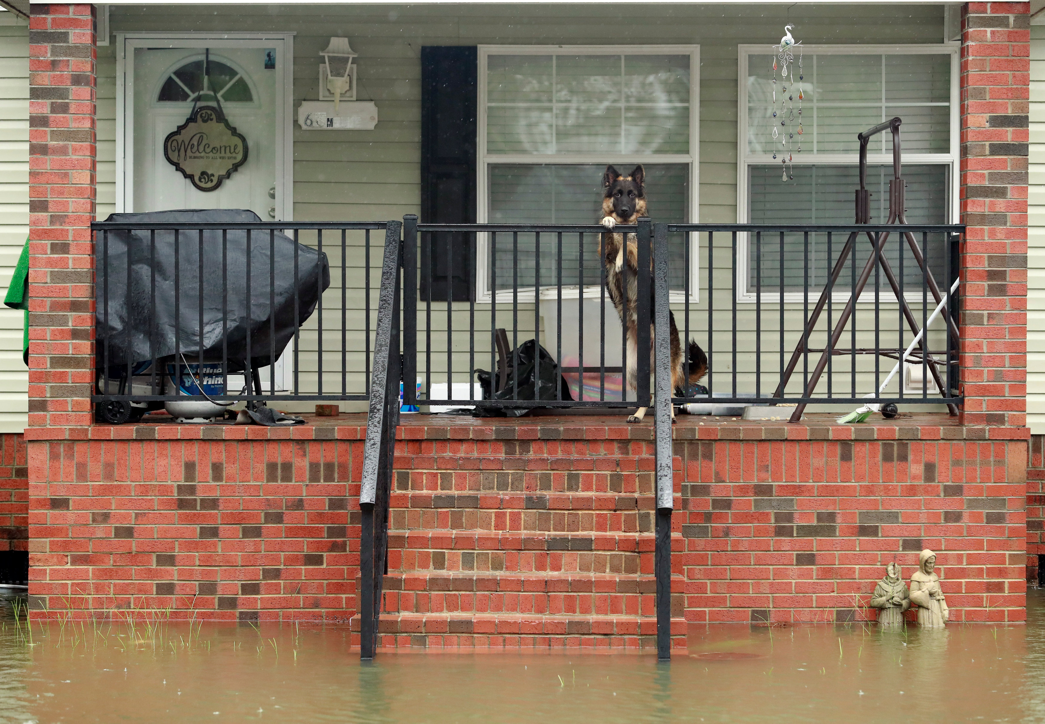 Dog seen on porch in Hurricane Florence aftermath in Lumberton