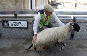 Shepherd David Seamark holds onto one of his flock ahead of the annual London Sheep Drive, in London