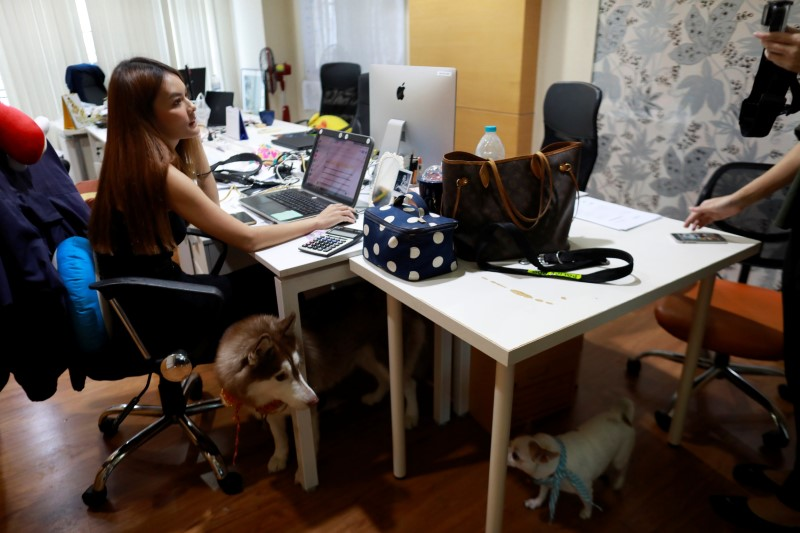 Dogs are seen near a New's desk as she works in an office of a digital advertising agency which promotes bring-your-dog-to-work in Bangkok