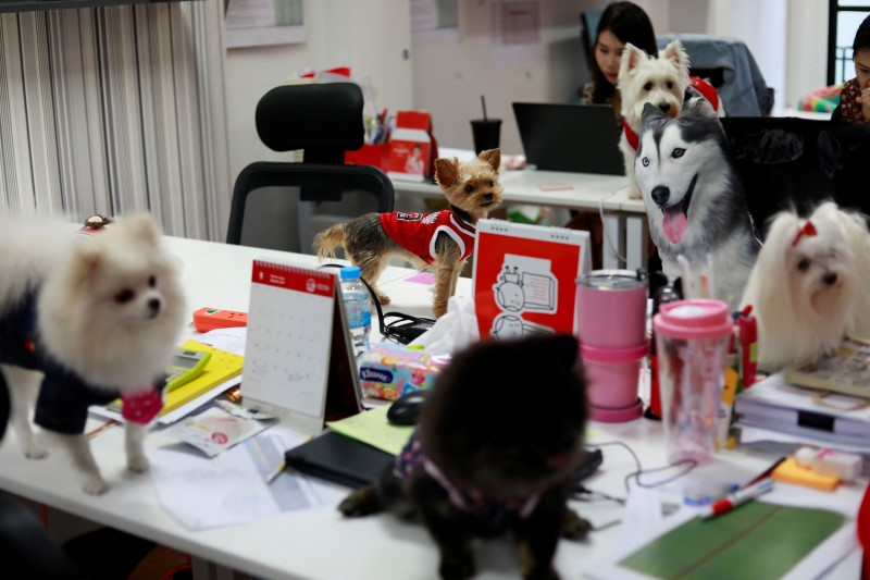 Dogs are seen on the desks as staff work in an office of a digital advertising agency which promotes bring-your-dog-to-work in Bangkok