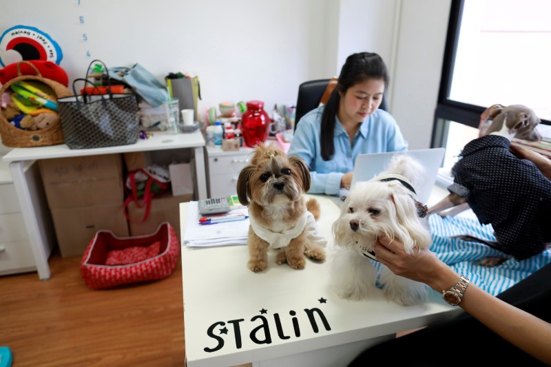 Dogs are seen on Jirmas' desk as she works in an office of a digital advertising agency which promotes bring-your-dog-to-work in Bangkok