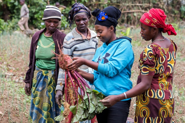 Assoumpata Uwamariya samples raw beetroot bulbs harvested from a farm in Rubavu district, Western province