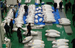 Frozen tuna are displayed before the first tuna auctions on the opening day of the new Toyosu fish market in Tokyo
