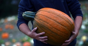 A farmer carries a pumpkin through a field at Pumpkin Moon in Maidstone