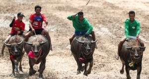 Jockeys compete in Chonburi's annual buffalo race festival in Chonburi province