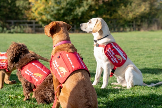 Dogs from charity Medical Detection Dogs, are seen in Milton Keynes