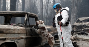 Moutard searches for human remains with her cadaver dog in a truck destroyed by the Camp Fire in Paradise