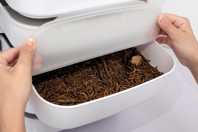 Mealworms and potato skin are seen inside a mealworm incubator, made by Livin Farms, in Hong Kong