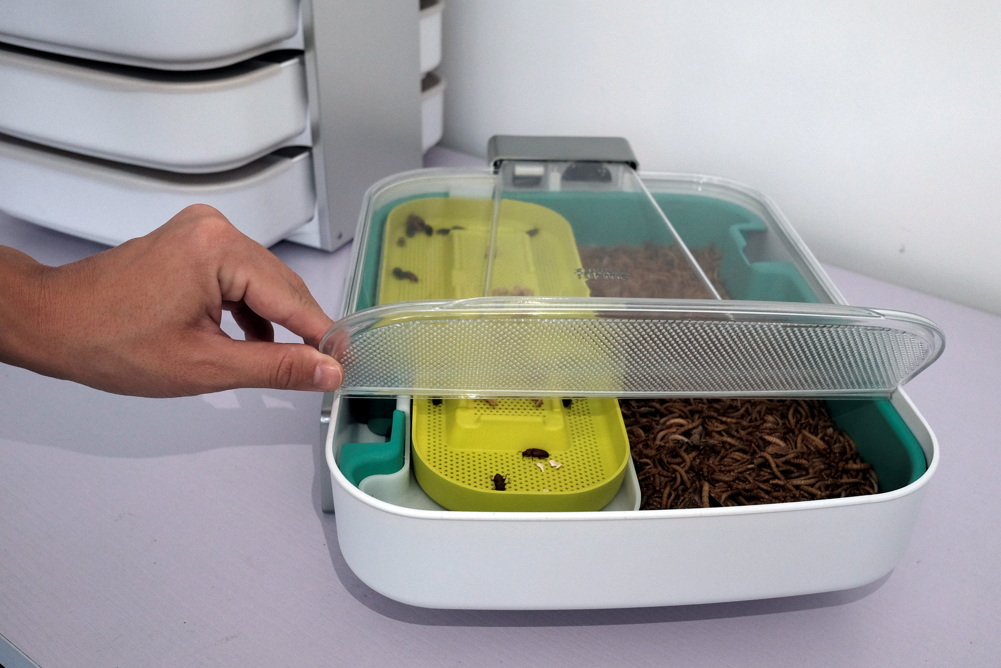 Mealworms and mealworm beetles are seen inside a mealworm incubator in Hong Kong